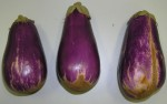Feeding damage to aubergines